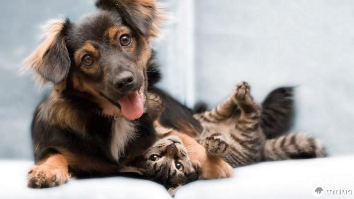 dados do gato