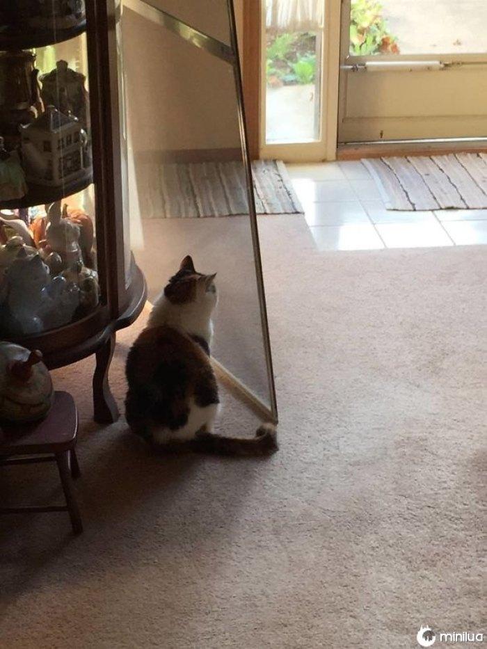 Colocar em portas de tela para o tempo mais quente, meu gato pensa que eu mudei a porta