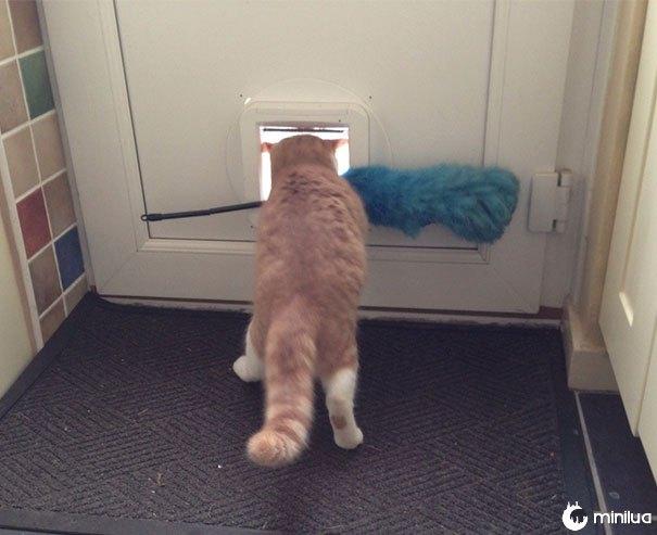 Meu gato continua tentando roubar o espanador, felizmente ele nunca fica longe demais