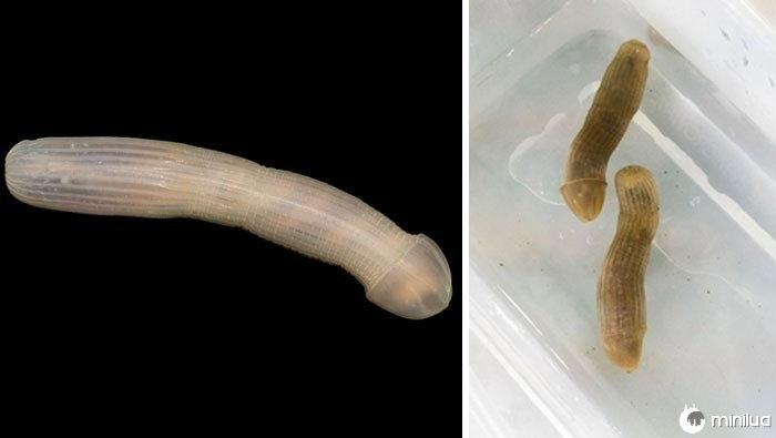 animais de águas profundas, peixes de águas profundas, os cientistas estudaram o oceano a uma profundidade de 4000 m, peixes a uma profundidade de 4000 metros