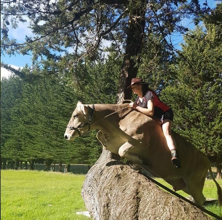 Menina que não podia ter cavalos, decide treinar vaca leiteira para saltar como um. | Minilua