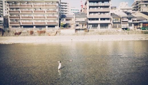 点と点をつなぎ、京都へ<br />佐々木典士