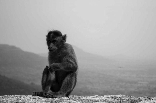 scimmietta in testa