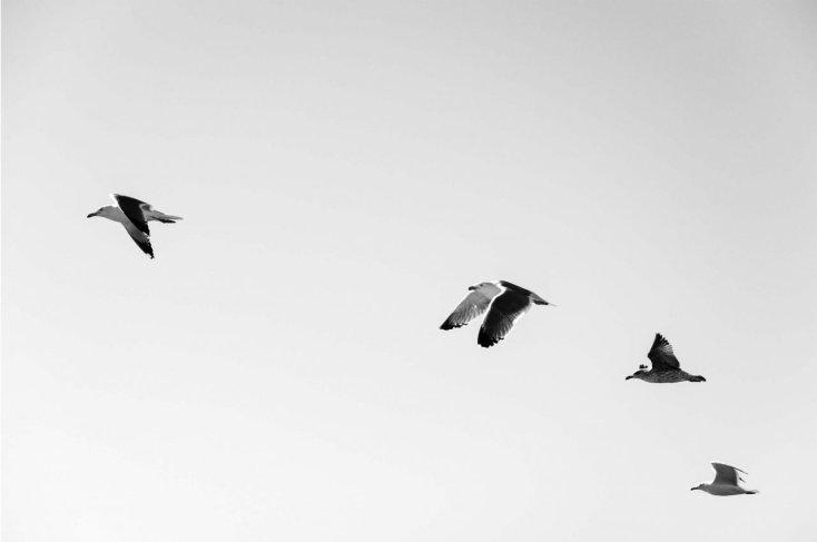 seagulls freedom minimalism