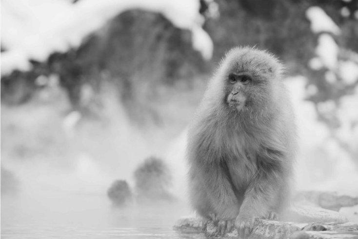 hairy monkey