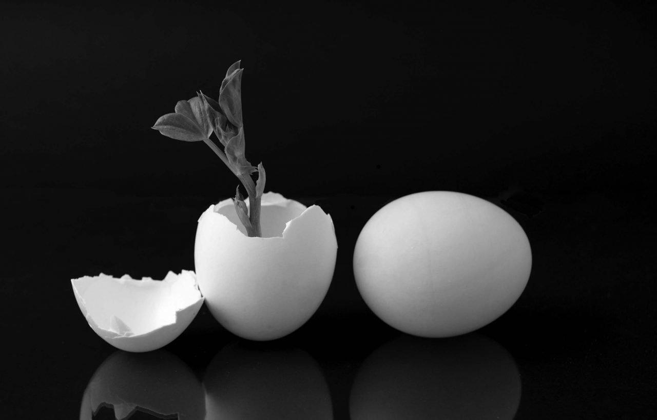 uova che donano vita ad una pianta