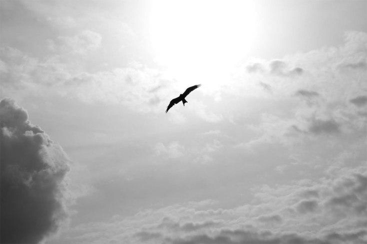uccello e liberta