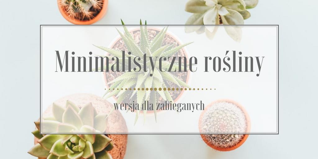 Minimalistyczne rośliny do Twojego domu, wersja dla zabieganych