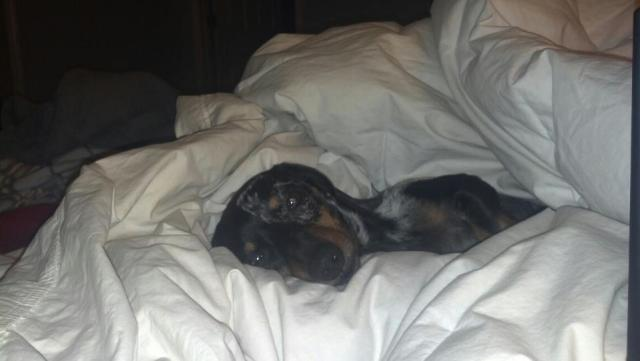 We welcomed another new family member too, Jack the weiner dog, my nephew! (brothers dog)