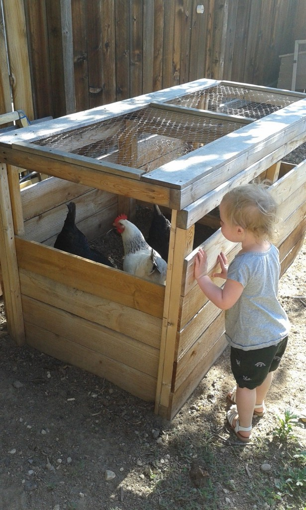 AND we got to chicken sit!  We watched Bertha, Lucy and Snowflake and got 3 eggs!