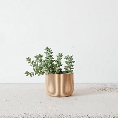 Lotus indoor planter