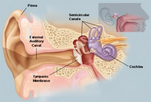 NoiseInduced Hearing Loss Physiology | Mining Health and