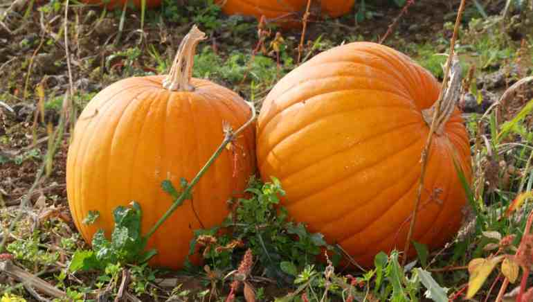 pumpkin game ideas for children