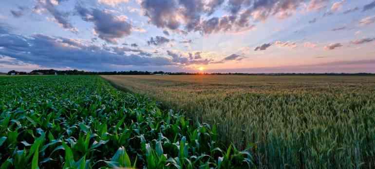 Summer Sunset Harvest Fields