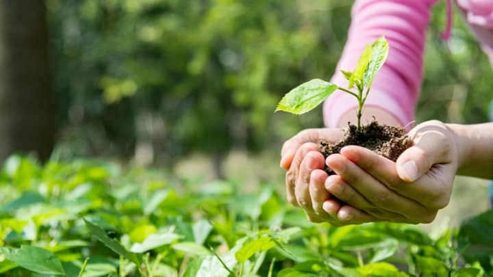 Object Lesson & Craft: Good Dirt and Good Seeds (Mark 4:1-20)