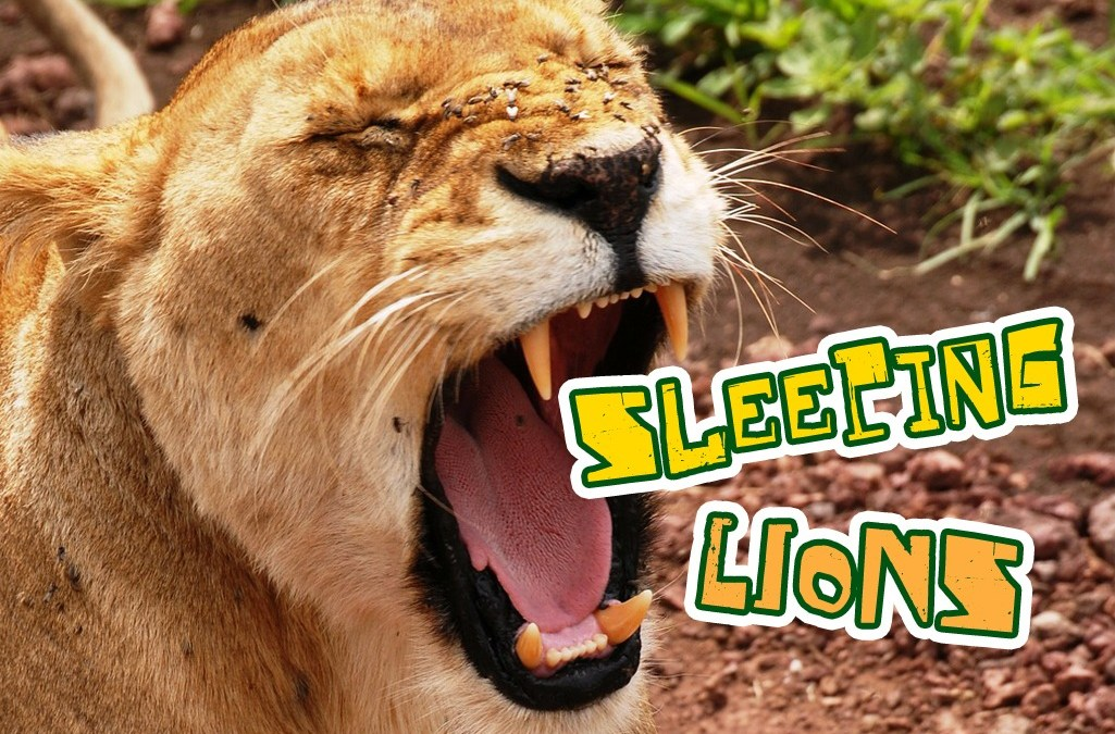 'Sleeping Lions' Game