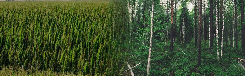 hemp paper can help solve deforestation