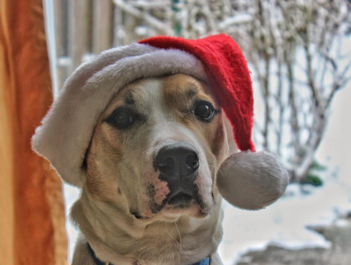 You'll even find something for your four-legged friends in MInistry of Hemp's Holiday CBD Gift Guide! Photo: A large multi-colored dog in a Santa hat seen in front of a window showing a snowy scene. You'll even find something for your four-legged friends in MInistry of Hemp's Holiday Hemp Gift Guide!
