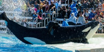 Sea World Orlando Florida One Day Touring Plan for Under 5's