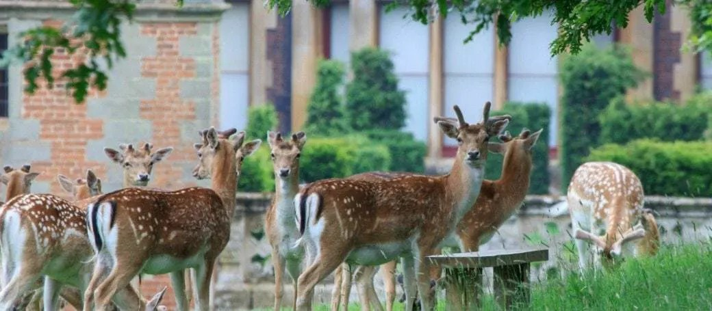 Fallow deer at Charlecote park, as featured in my list of National Trust days out in the West Midlands