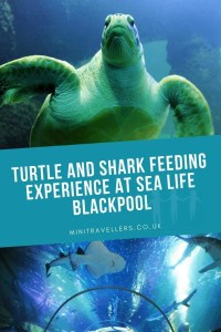 Turtle and Shark Feeding Experience at Sea Life Blackpool