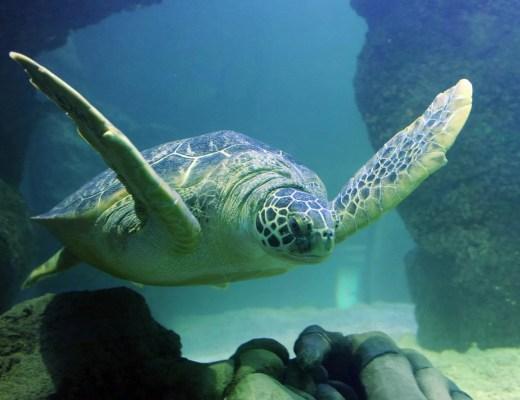 Turtle and Shark Feeding Experience at Sea Life Blackpool