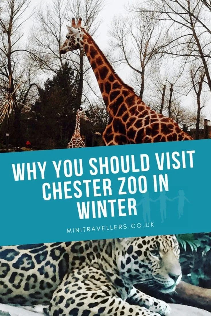 Why You Should Visit Chester Zoo In Winter