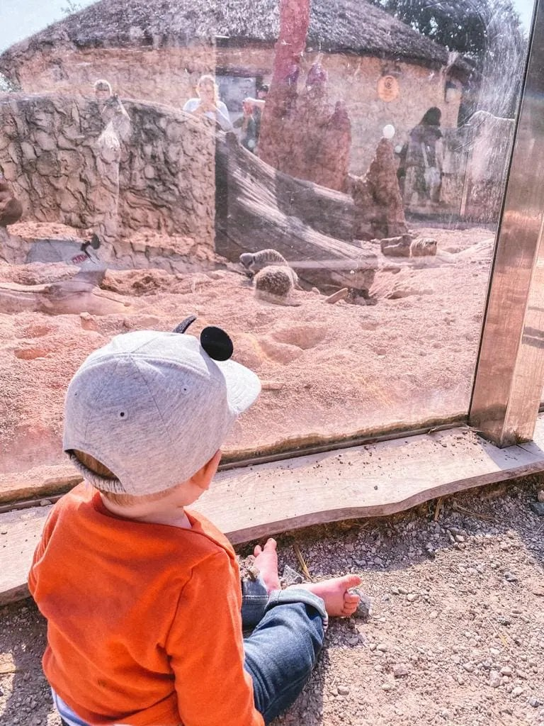 West Midland Safari Park – An Unforgettable Safari Experience