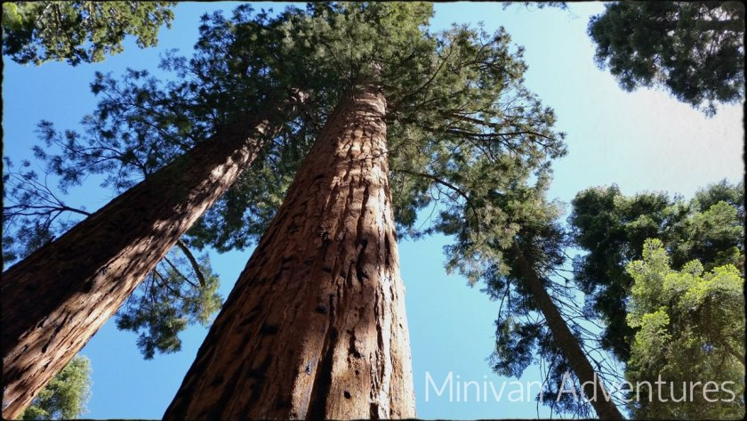 Our big road trip all started with a mutual desire to see the great sequoia trees in California.