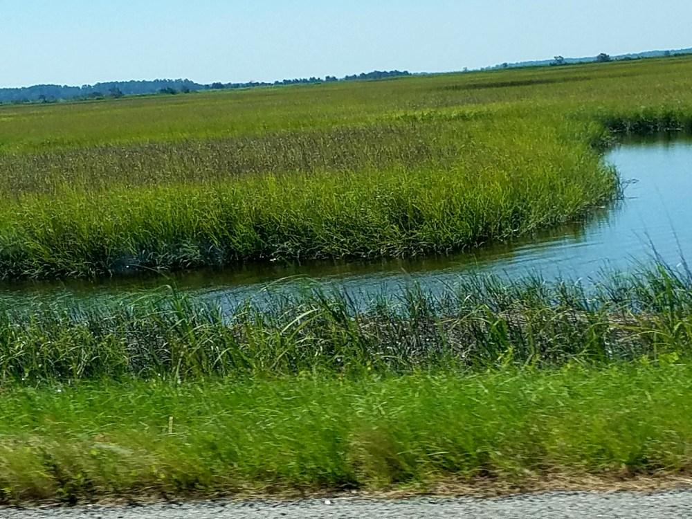 7717 salt marshes savannah3 seagrass2