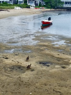 81817 nantucket low tide