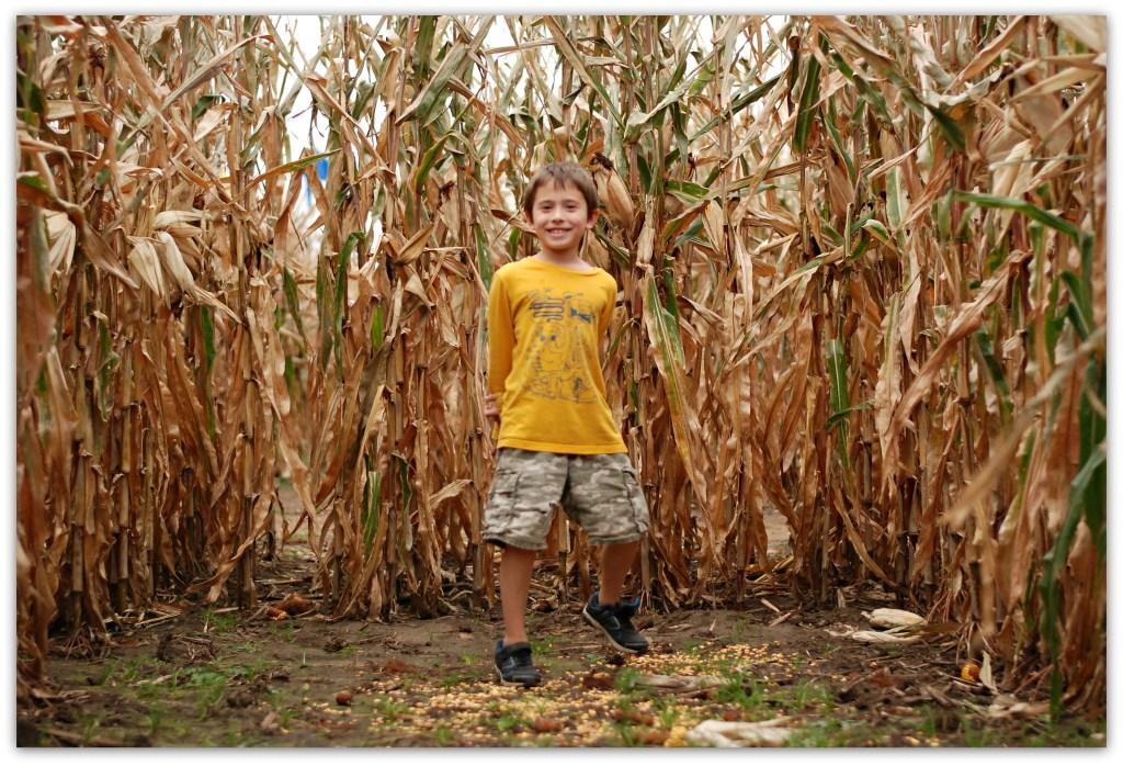 corn-maze-ii