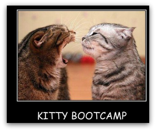 Kitty Bootcamp