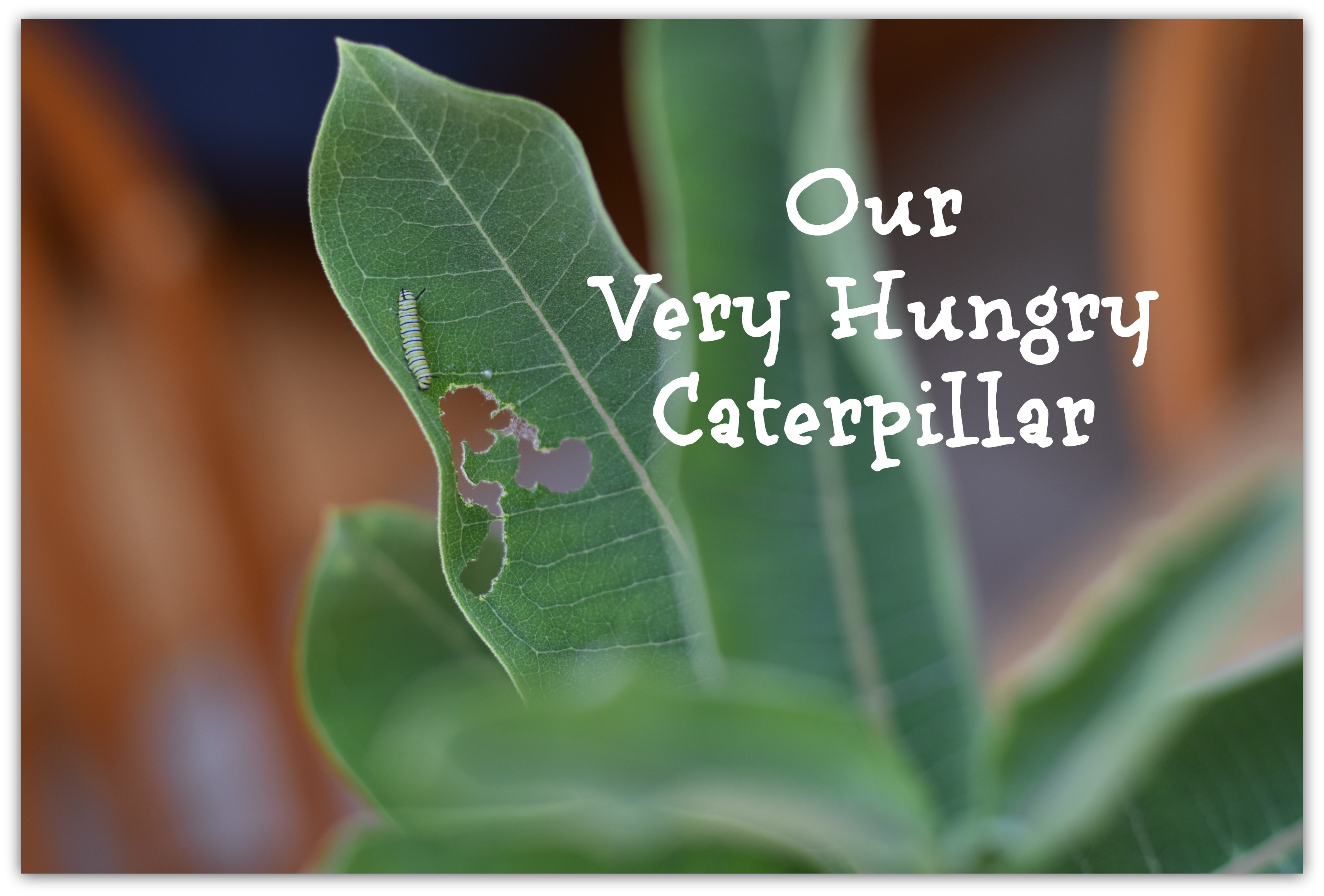 Our Very Hungry Caterpillar