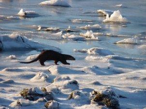 Otter Crossing Dunvegan Loch