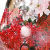 多重露光(宮川町+建仁時の紅葉+府立植物園の桜)
