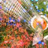 秋の京都で多重露光