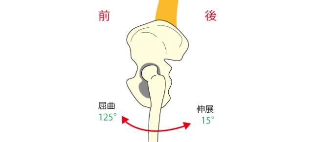 股関節の動き-2