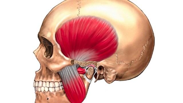 頭蓋骨について