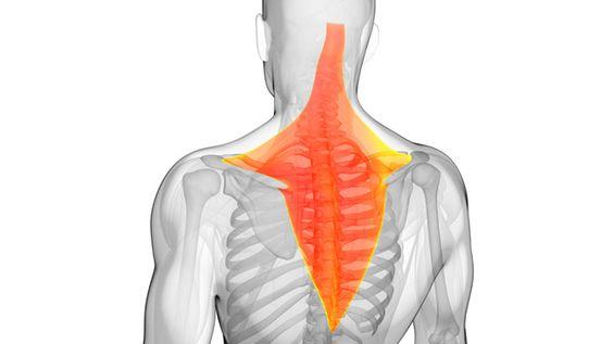 姿勢pt5 肩甲骨の間が張るのは姿勢を正せないからでしょうか?
