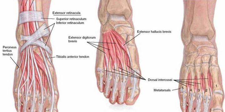 足部pt4 問題に気付かれない・軽く見られがちな足指