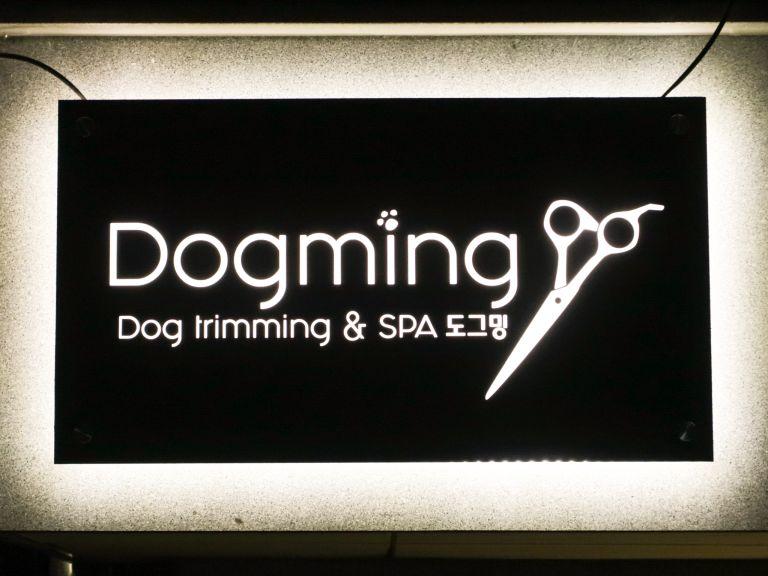 도그밍-12