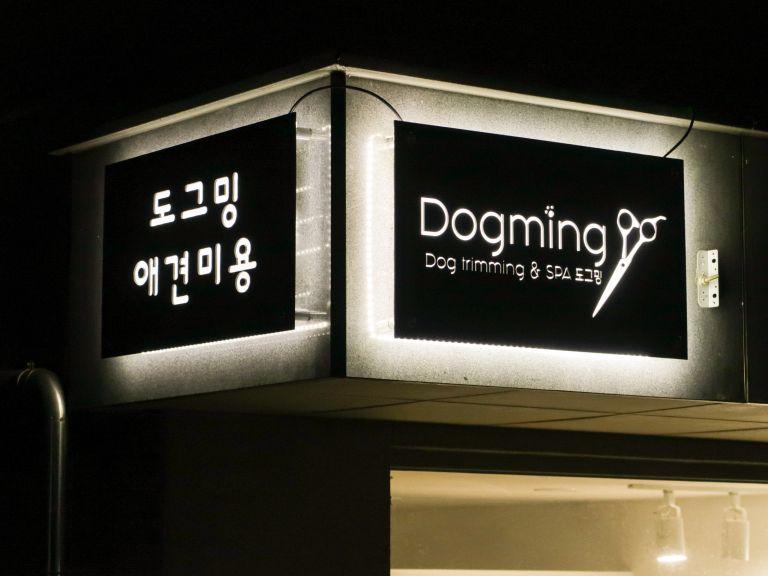 도그밍-5