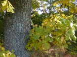 Trädstam med grönt
