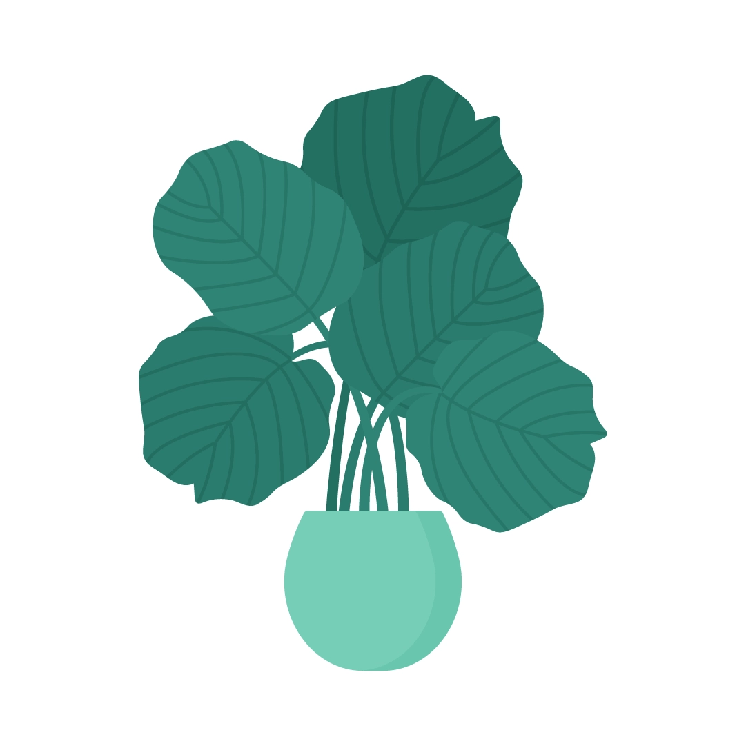 Vector illustration of a Calathea Orbifolia plant in a round pot in flat design style