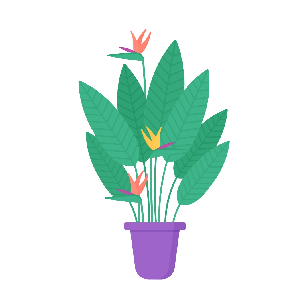 Vector illustration of a Strelitzia Reginae with flowers plant in flat design style