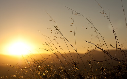 Nature Seasons Spring Sunrise spring sun 069290