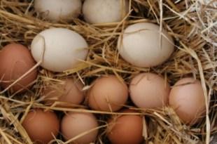 kana muna toit sook toiuaine