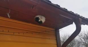 Auku kinni jaanud kass 1