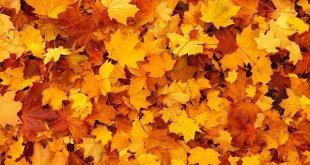 autumn gc205e34ef 640